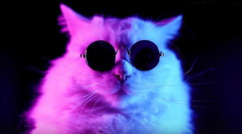 Aksi Kedi Yayın Hayatına Başladı!