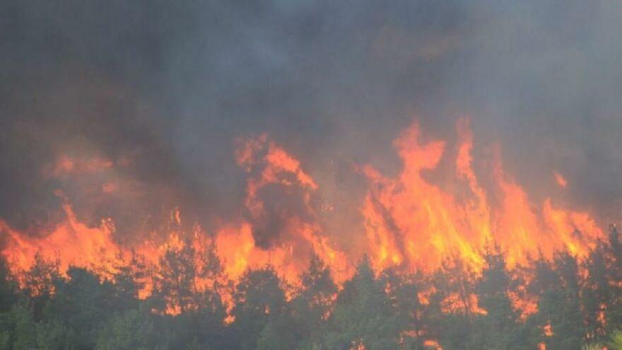 Çanakkale'nin Bayramiç ilçesi Bekirler köyünde orman yangını çıktı.